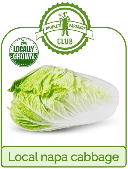 Local napa cabbage