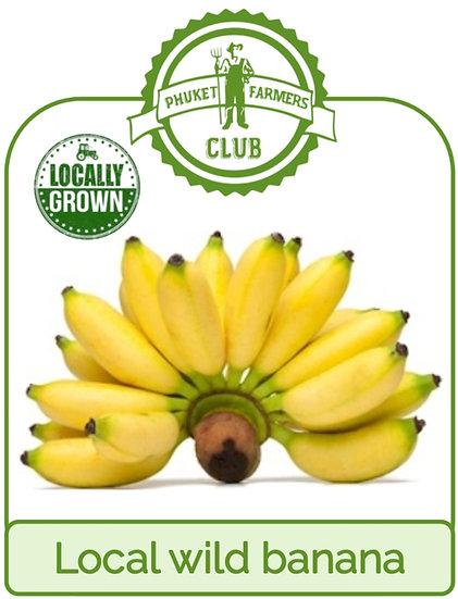 Local wild banana