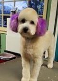 Purple ear dye