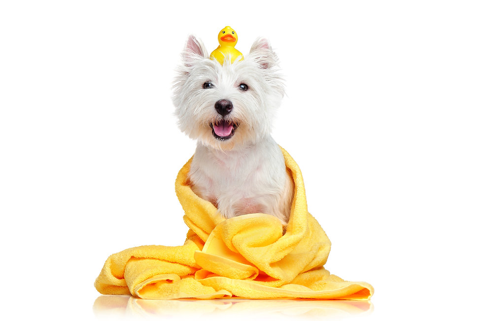 Happy dog after bath wrapped in a towel.