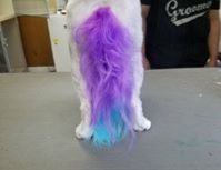 Ombre tail