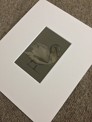 Fine Art Print - Shored Fragments (Study of a Roman Swan), 2019
