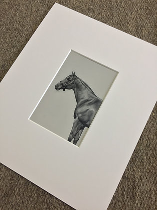Fine Art Print - Study of a Standing Horse IV, 2019