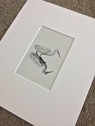 Fine Art Print - Study of an Egret, 2019