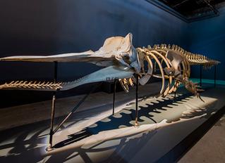 The Leviathan Metaphor