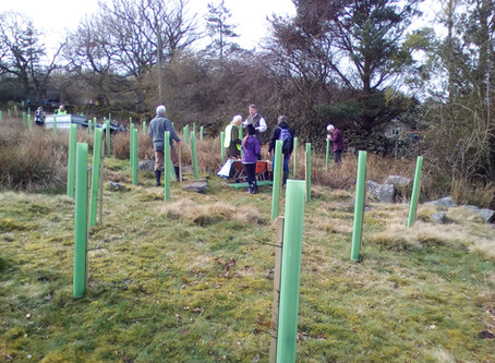 First White Rose Forest trees planted in Harrogate
