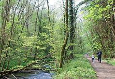 woodland-3398242_1920_edited.jpg