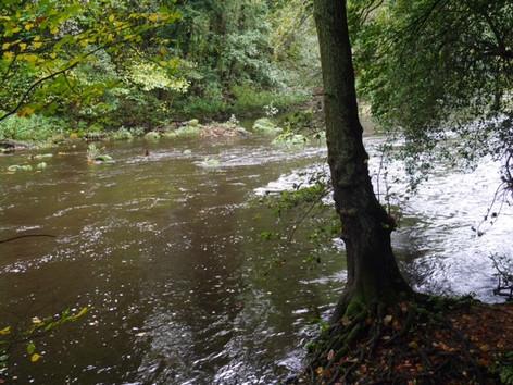 NG River Nidd.jpg