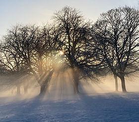 Winter Sunshine on the Stray.jpg