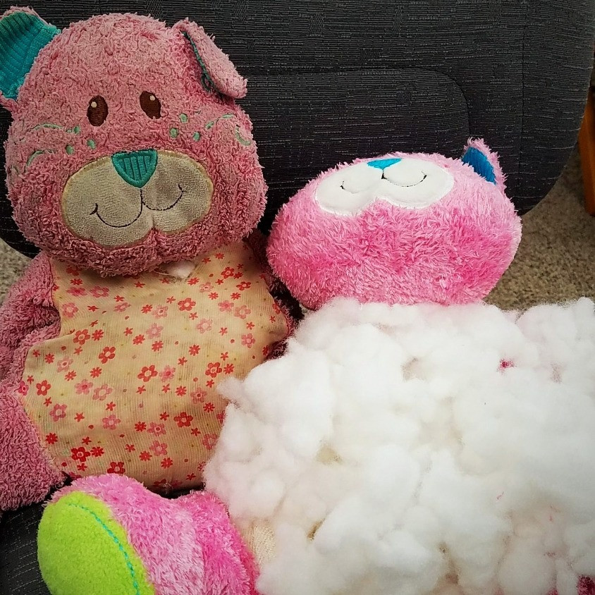 teddy bear surgery