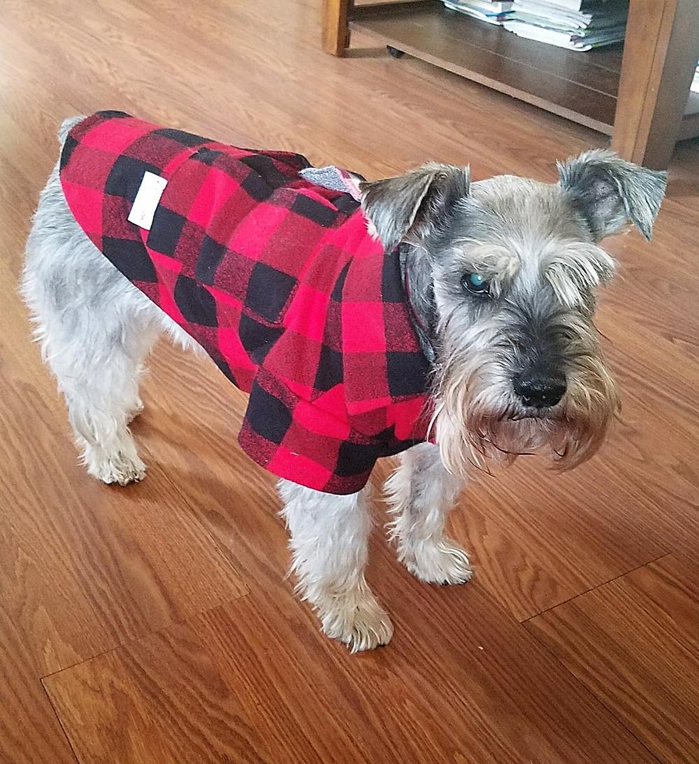 flannel warming dog shirt