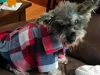 Flannel Shirt for the Fur Baby!