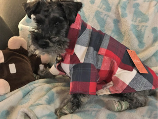 Heated Shirt for our Fur Baby