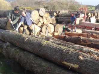 Rolling logs to the sawmill