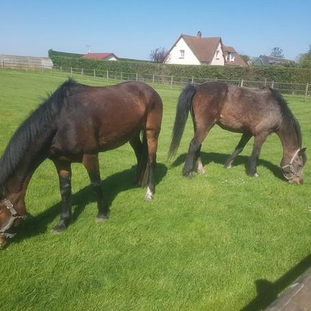 Confinement : les poneys se mettent au vert