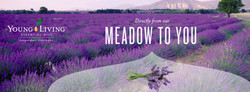 Meadow to You