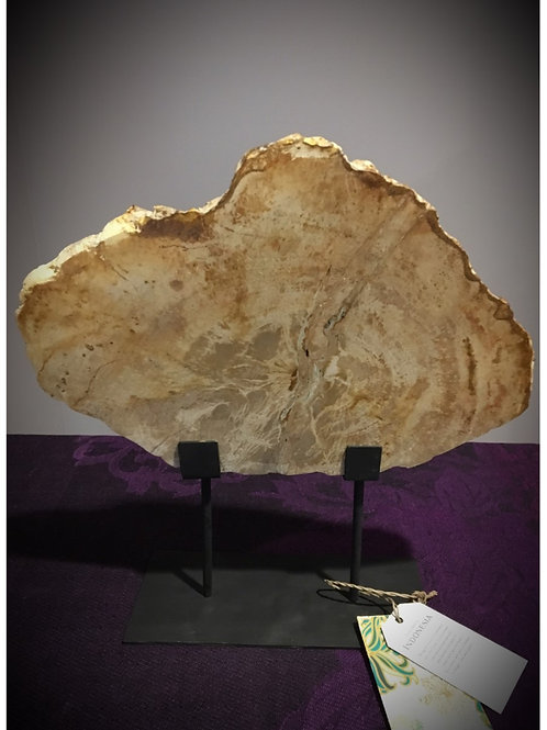 Slabs of Petrified Wood (on Stand)