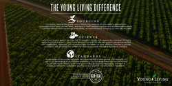 Young Living Difference