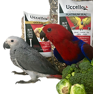 uccello home page.png