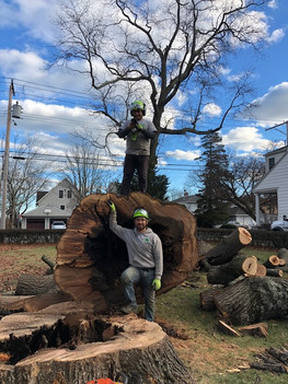 Tree Removal - Tree Cutting Service - Tree Trimming