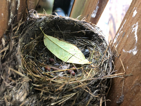 Playgrounds and Empty Nests