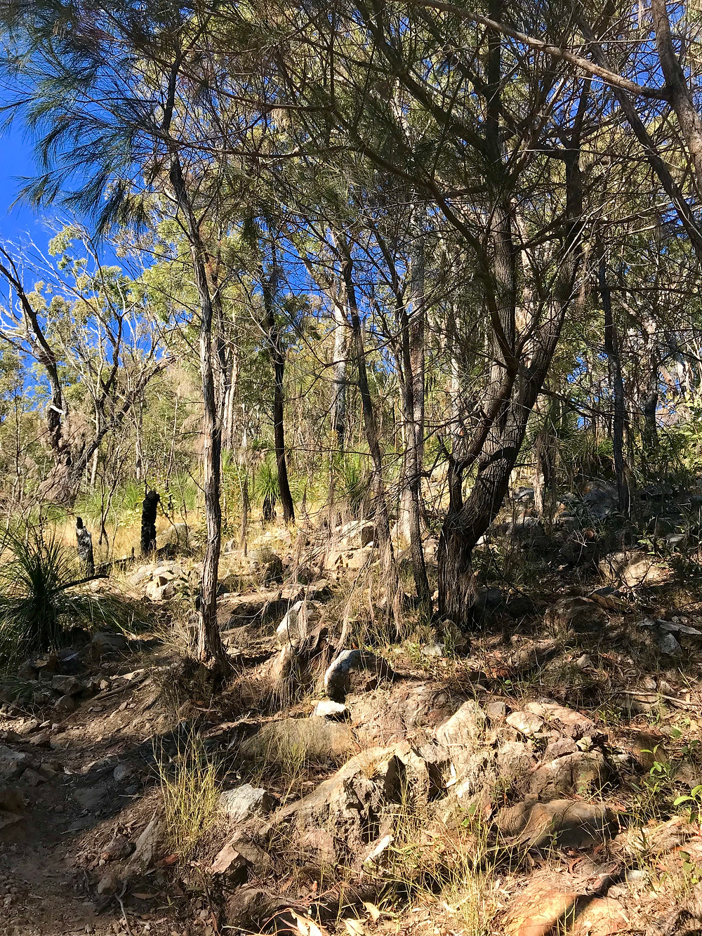 Mount May Hike Trail, Scenic Rim, Queensland