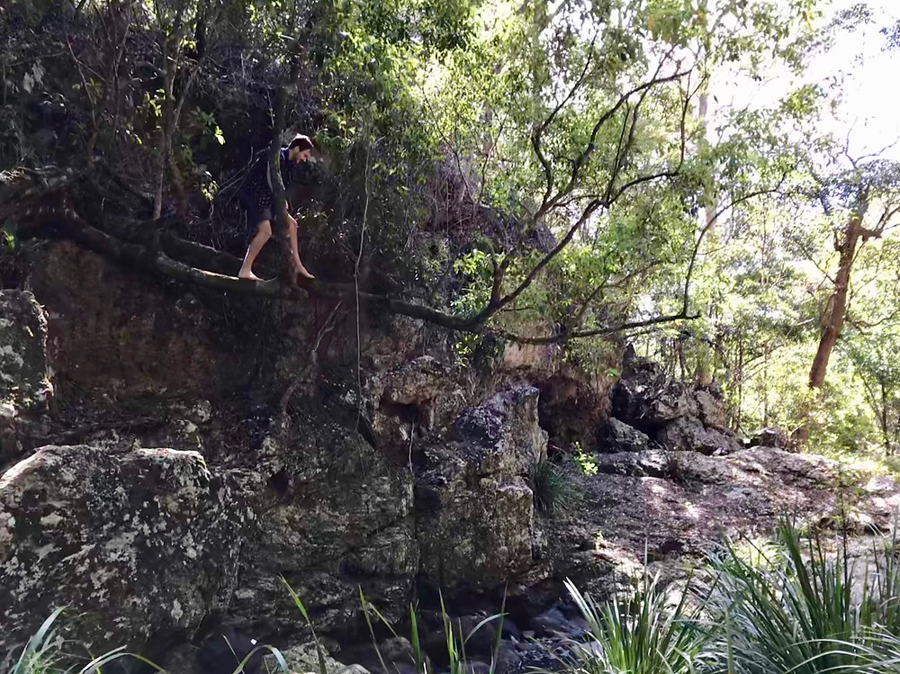 Hike Kondalilla Falls
