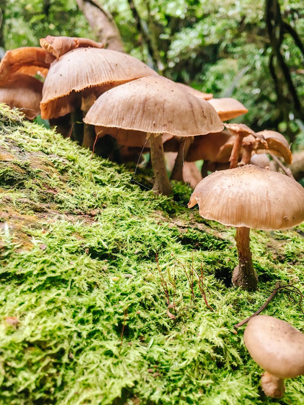 Wild Mushrooms Toolona Creek Falls Hike Lamington National Park