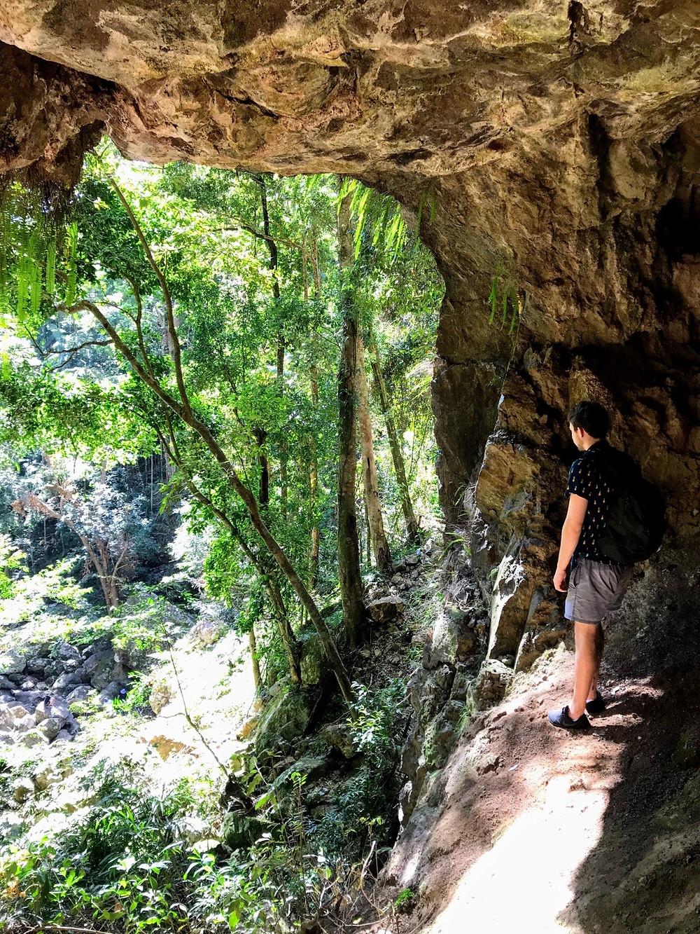 The hidden bat cave of Kondalilla Falls