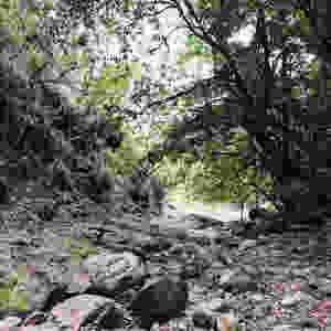 Steamers Hike Main Range National Park