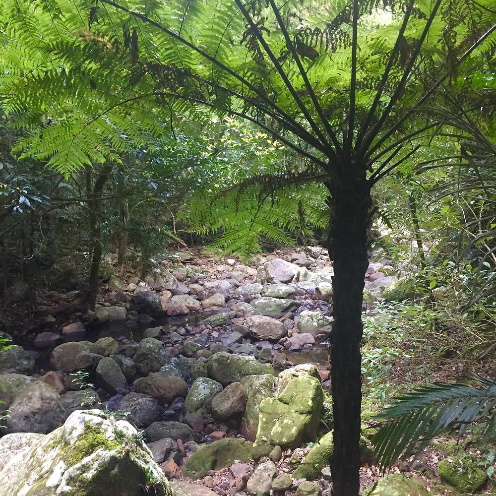 Springbrook Pinnacle, Gold Coast Hinterland Hike