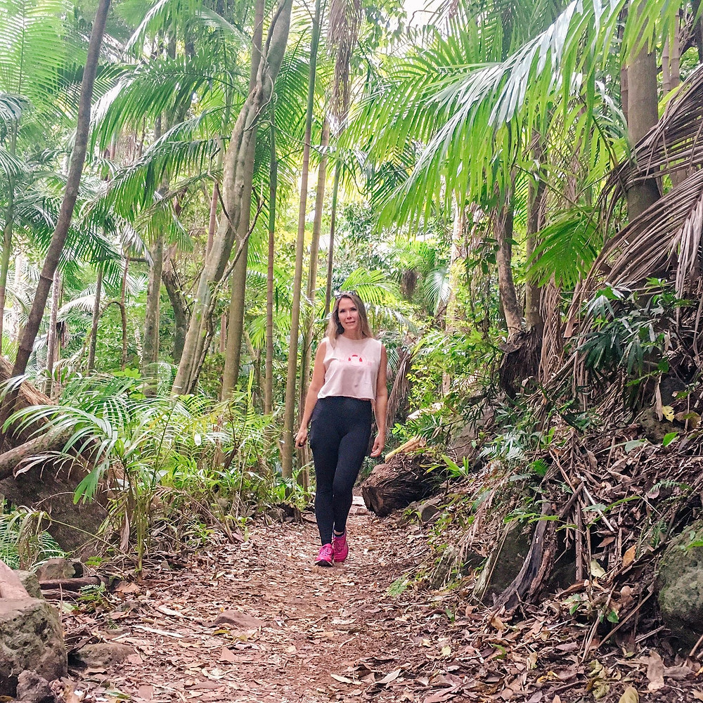 Hiking Witches Falls at Mount Tambourine