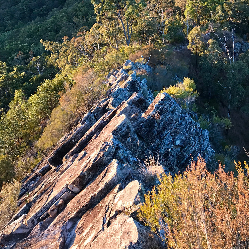 Pages Pinnacle Hiking Guide Springbrook Gold Coast Hinterland