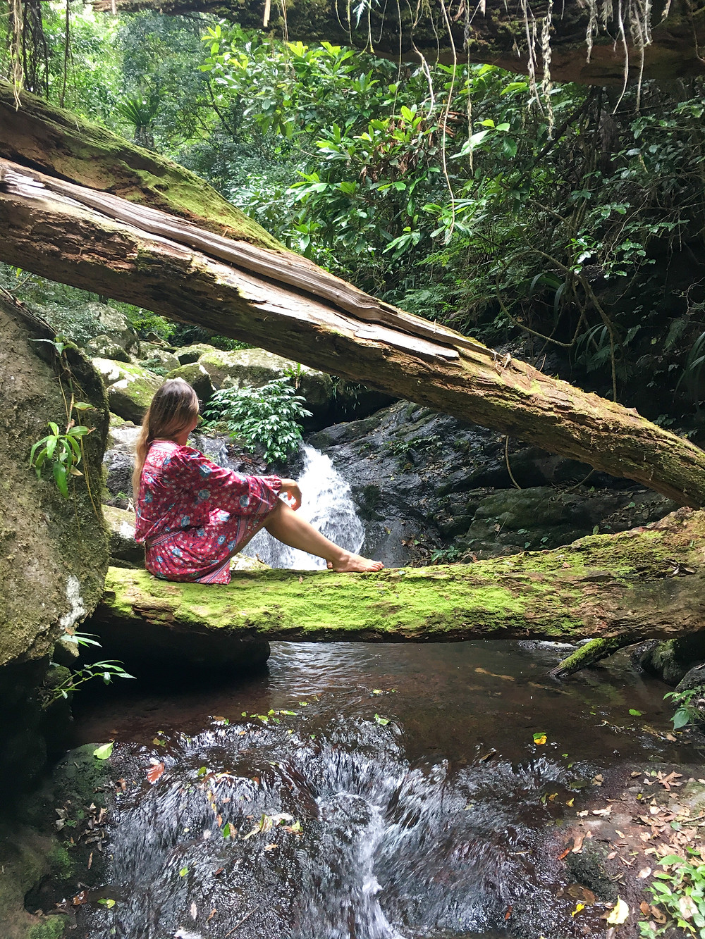 Toolona Creek Falls Hike Lamington National Park