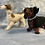 Thumbnail: Hand Knitted Dogs