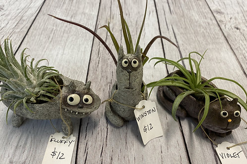 "Air Plant ""Cats"""