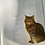 Thumbnail: Encyclopedia of The Cat