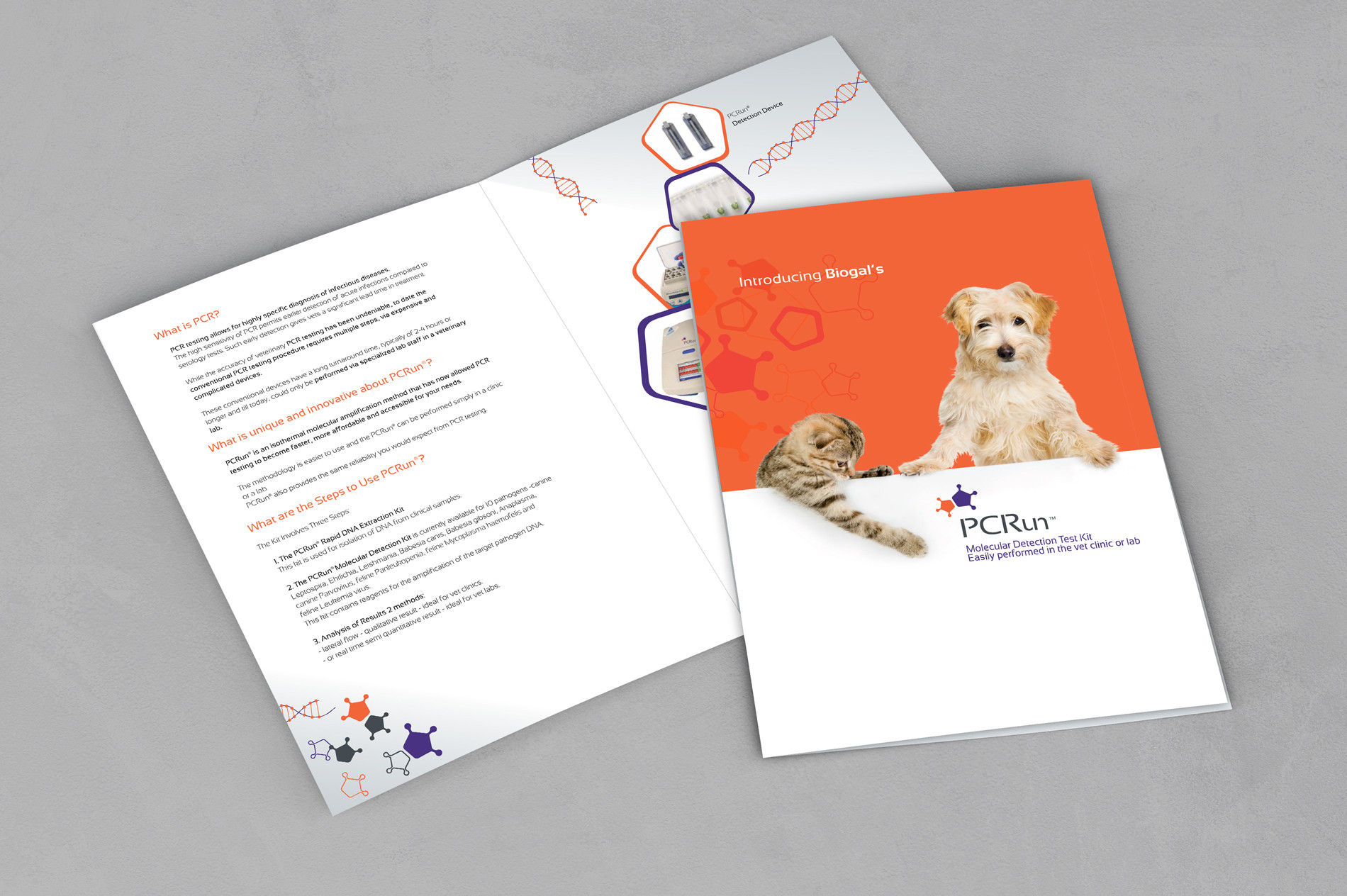 brochure-design-pcruan.jpg