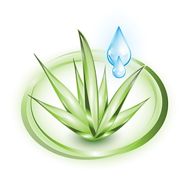 Aloe_with_water_droplet_AdobeStock_54163