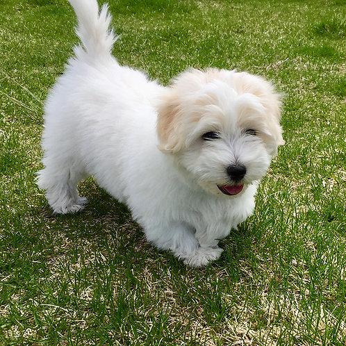 S.T.A.R. Puppy Classes