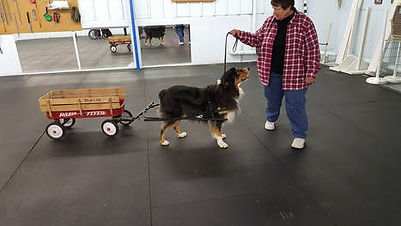 cody-carting.jpg