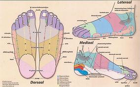 drukpunten en zones bij voetreflexologie