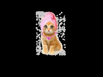 catTRANSPARENT (1).png