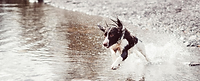 water dog.png