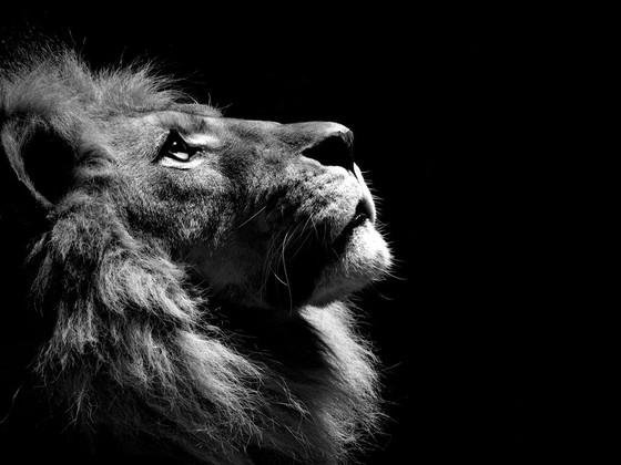 A Lion Remains
