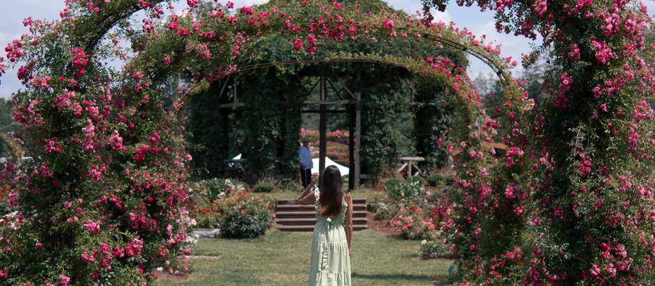 BRUNCH AND ROSES AT ELISABETH PARK