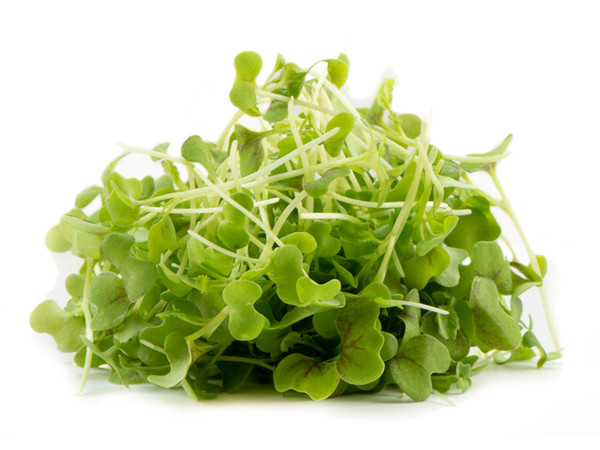 Mustard Green