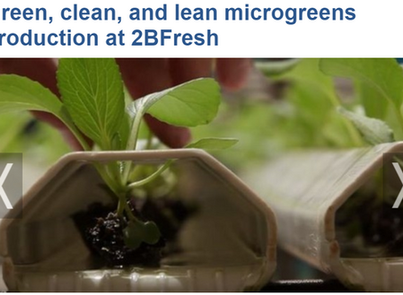 Green, clean and lean microgreens production at 2BFresh