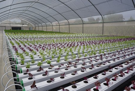 Self-assembly greenhouse to be launched in USA