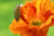 Cushla Moorhead-S-set-The Flames of Glor
